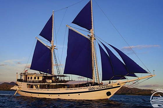Liveaboard Indonesia Indo Aggressor